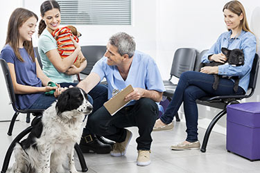 attracting-new-clients-vet-office