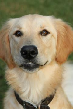 Canine Carnassial Teeth Abscesses With Few Symptoms