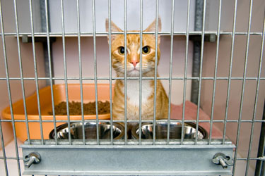 hsah-adopt-shelter-animals