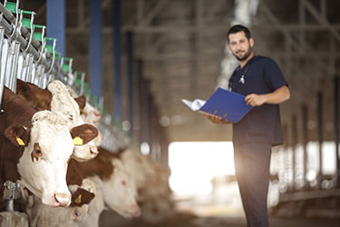 Need for Livestock Vets Continues to Rise