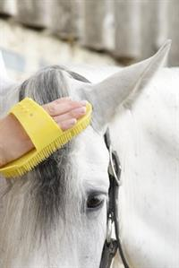 white-horse-head-being-brushed