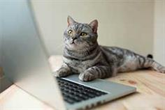 cat typing on keyboard