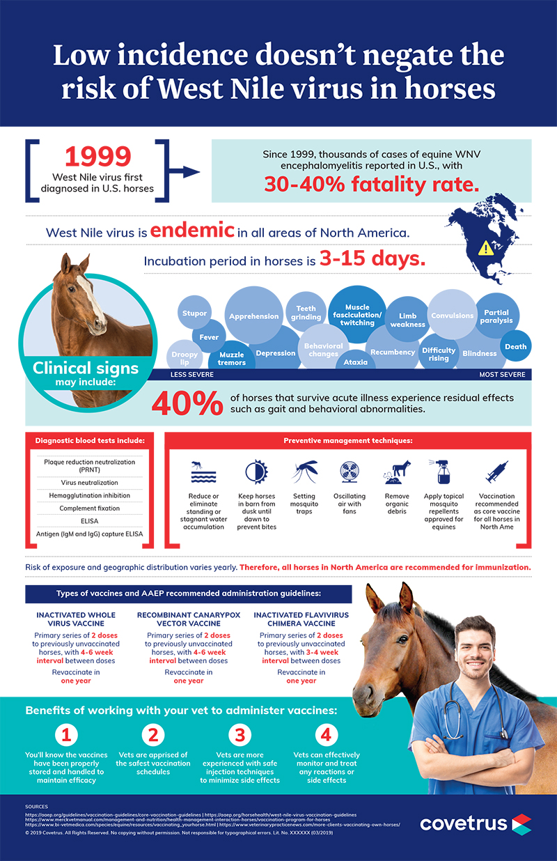 West Nile virus in horses infographic