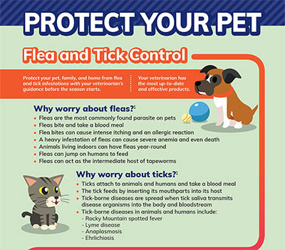 Protect Your Pets Infographic